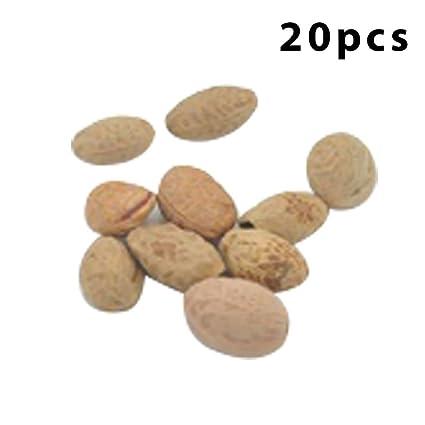 Amazon com: Cherry Blossom Seeds 20pcs/Bag Sakura Seeds Home Garden