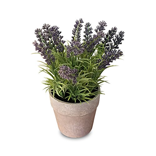 The Realistic Faux Long Leaf Lush Lavender (Lavandula) in a Stone Effects Pot, 6 ¾ x 9 ½ Inches, By Whole House (Lavender Coffee Pot)