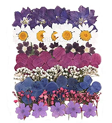 Pressed flowers mixed pack, larkspur, hydrangea, baby breath, gypsophila, lace, marguerite, foliage from Silver J