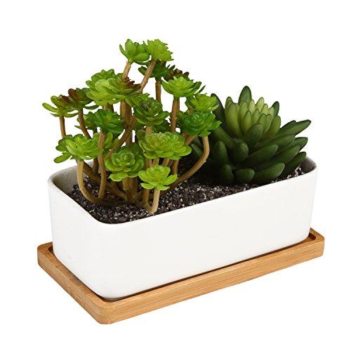 Succulents Containers Amazon Com