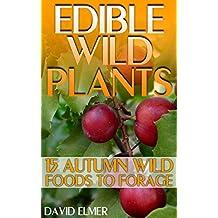 Edible Wild Plants: 15 Autumn Wild Foods to Forage