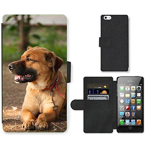 Just Phone Cases PU Leather Flip Custodia Protettiva Case Cover per // M00129175 Adorable animal brun canin mignon // Apple iPhone 5 5S 5G