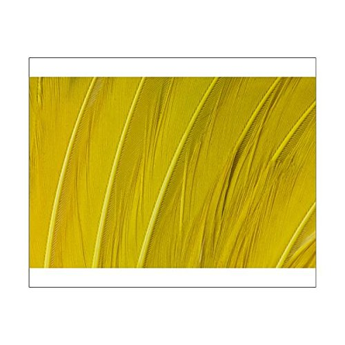 Media Storehouse 10x8 Print of Regents Bower Bird Feathers in Yellow (14800455) ()