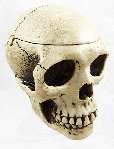 (Homosapien Skull Prehistoric Man Skeleton Head Cigarette Ashtray Figurine Box)
