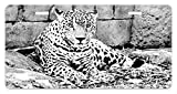 Black and White License Plate by Ambesonne, Jaguar Wild Big Cats Theme Feline with Dots Body Fur Jungle Tiger Leopard, High Gloss Aluminum Novelty Plate, 5.88 L X 11.88 W Inches, Black White