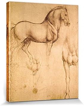 1art1 Leonardo Da Vinci - Estudio De Un Caballo, 1493-1494 Cuadro, Lienzo Montado sobre Bastidor (50 x 40cm)