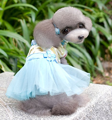 [SMALLLEE_LUCKY_STORE Chinese Traditional Tang Suit Dress, Blue, X-Large] (Business Suit Dog Costume)