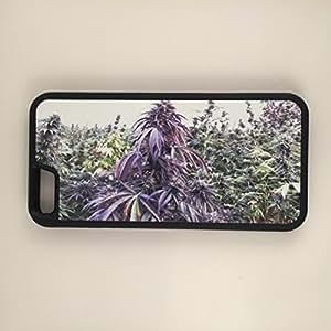 "Marijuana Purple Kush Weed Garden iPhone 6 Plus 5.5"" Hybrid Rubber & Plastic Case"