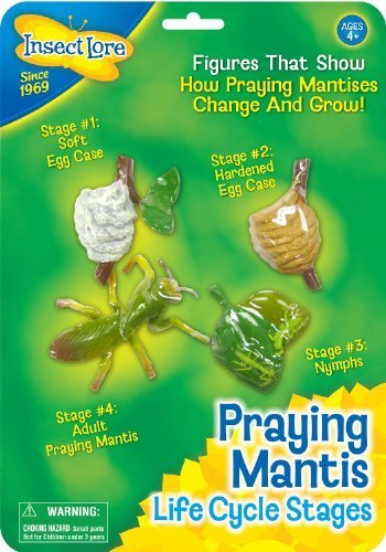 - Insect Lore Praying Mantis Life Cycle Stages by Insect Lore