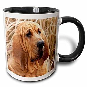3dRose 140323_4 Purebred Bloodhound Dog In Dried Grass Mug, 11 oz, Black 13