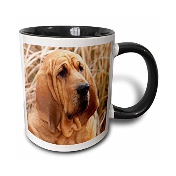 3dRose 140323_4 Purebred Bloodhound Dog In Dried Grass Mug, 11 oz, Black 1