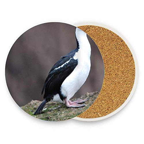 Imperial Shag Birds Coaster for Drinks Absorbent Stone Coaster, Cups Holder Coffee Mug Cup Mat Pack Of 1