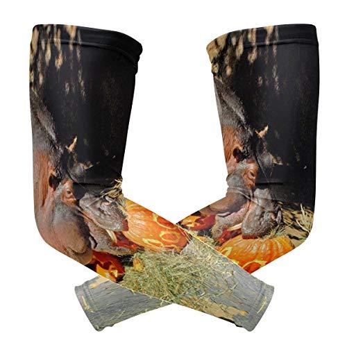 Arm Sleeves Halloween Rhinoceros Pumpkin Compression Protection for Women Men - Baseball Basketball Golf Cycling Running (1 Pair)