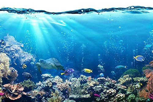- Yilooom Tropical Fish Ocean Reef Turtle Nature Photo inch Poster 24x36 inch