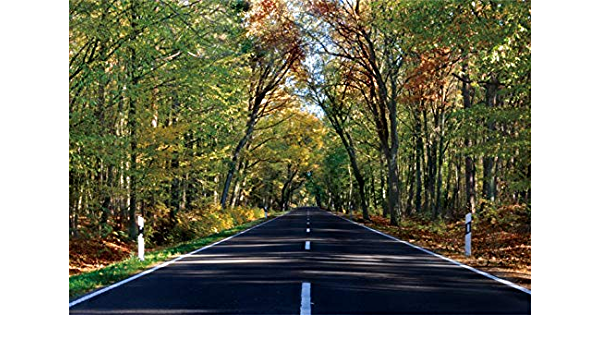 Yeele Autumn Road Photography Backdrop National Park Highway Background 10x10ft Wedding Portrait Banner Room Decoration Photo Booth Photoshoot Studio Props Wallpaper
