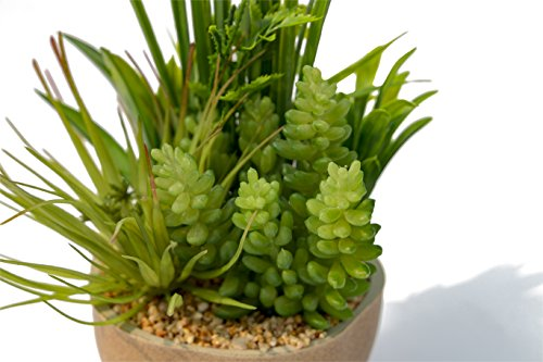 BEGONDIS Artificial Succulents Plants Plastic Fake Topiary Selected Combination With Gray Pot For Home Décor by BEGONDIS (Image #6)