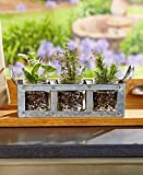 3-Jar Galvanized Mason Jar Planter