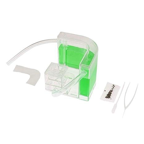 B Blesiya 1 Pieza Hormiguero para Niños Experimento Juegos Educativos - 1 Capa con Manguera Verde
