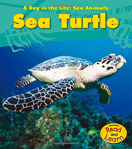 Sea Turtle (A Day in the Life: Sea Animals)