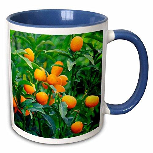 3d Rose mug_83504_6 Two Tone Mug, 11 oz, Blue