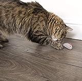 SmartyKat Skitter Critters Cat Toy Catnip