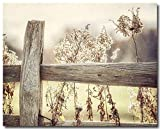 Rustic Country Farmhouse Decor 8x10'' Unframed Print, Golden Fence Landscape Photograph, Yellow Brown Tan Beige.