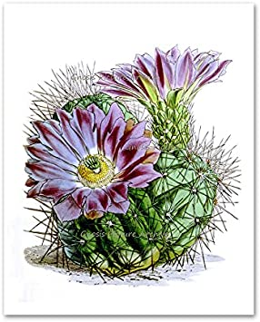 Cactus Flowers Southwestern Decor Set Of 6 Unframed Botanical Illustration Wall Art Prints Posters Prints