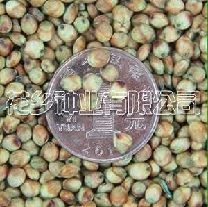 16 Tipo completa, 500 gramos de forraje; forraje; jardín semillas de gramíneas forrajeras planta de los bonsai casa de bricolaje 11