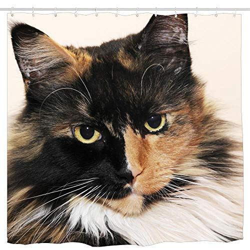 KOiomho Maine Coon Cat Abby Shower Curtain Mildew Resistant Design Decor Waterproof Odorless Eco Friendly Anti Bacterial Bath Curtains 6072 inch