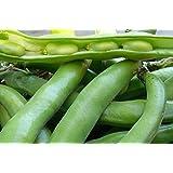 Go Garden Fava: 25+ Non-GMO Bean Seeds - Dark Red Kidney Fava Fordhook Lima Navy