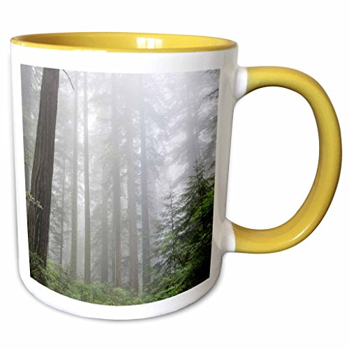 3dRose Danita Delimont - Forest - Lady Bird Johnson Grove, Prairie Creek Redwoods State Park, CA - 11oz Two-Tone Yellow Mug - Johnson Creek Outlet