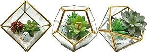 HelloHome Geometric Glass Terrarium Pentagon Metal 3PCS/Set with Air Plant Succulent Holders Decor Atrium Gold Cubic+Pentagon+Half Ball Pentagon for DIY Display for Garden, Home, Air Plant