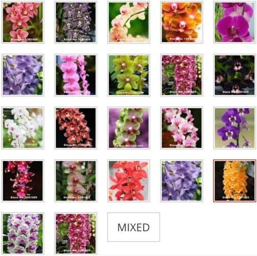 Red Supply Solution Moth Orchid 50 Seeds (Mixed Colors) - Phalaenopsis, Organic Fresh Seeds Non GMO, Indoor/Outdoor Seed Planting for Home Garden