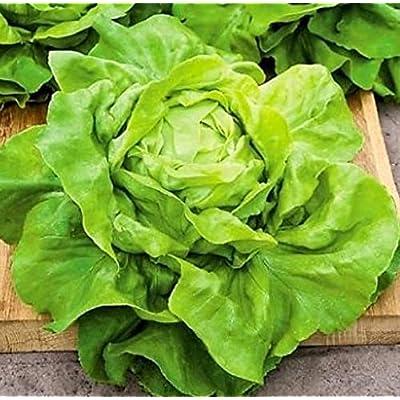 Lettuce Seeds, Organic Heirloom Vegetable Seeds, Non GMO, Buttercrunch Lettuce Seeds for Planting : Garden & Outdoor