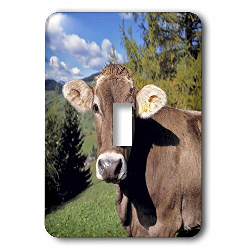 3dRose lsp_82188_1 Italy, Dolomite Alps, Swiss Brown Cow ...
