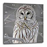 3dRose Barred Owl Wall Clock, 10 by 10-Inch For Sale
