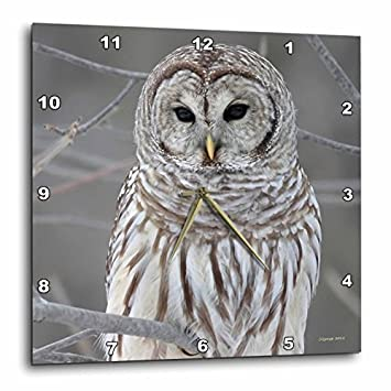 3dRose DPP_21195_3 Barred Owl Wall Clock, 15 by 15-Inch