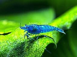 Aquatic Arts Invertebrate Pellets – 1 Year Supply Food for Shrimp, Crayfish, Crabs, Snails and more