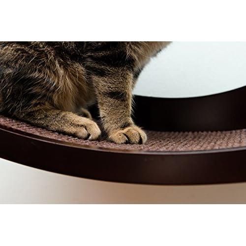 Chat Étagère Mural Moderne en bois courbé Perche–Un chat lit surélevé votre chat VA Adorer immédiatement.