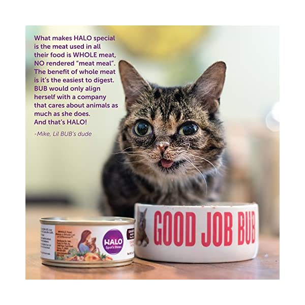 Halo Grain Free Natural Wet Cat Food, Chicken Stew (Pack Of 12)