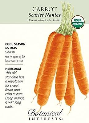 Scarlet Nantes Carrot Seeds - 1 gram - Organic