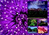 img - for Scotland, a Celebration book / textbook / text book