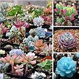200pcs Mix Succulent seeds Lithops Pseudotruncatella Bonsai plants Seeds for home & garden