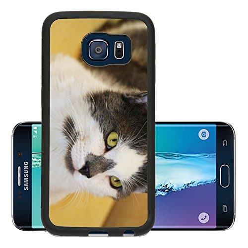 luxlady-premium-samsung-galaxy-s6-edge-aluminum-backplate-bumper-snap-case-kamil-scat-petsmart-adopt