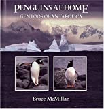 Penguins at Home: Gentoos of Antarctica