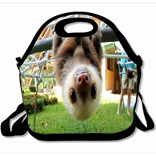 Ahawoso Reusable Insulated Lunch Tote Bag Cute Sloths Animal 10X11 Zippered Neoprene School Picnic Gourmet Lunchbox ()