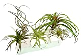 #8: 5 Artificial Tillandsia Air Plant Variety Pack for Terrarium Decorations Arrangements Hangers and Displays, 4 to 8 Inches Each