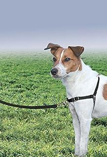 PetSafe Easy Walk Dog Harness, No Pull Dog Harness, Black/Silver, Small (B000BHUVM4)   Amazon price tracker / tracking, Amazon price history charts, Amazon price watches, Amazon price drop alerts