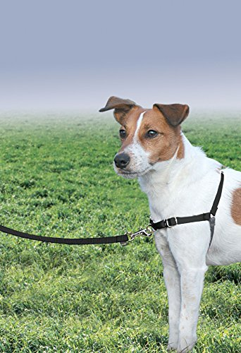 Gentle Leader Dog Puppy - PetSafe Easy Walk Dog Harness, No Pull Dog Harness, Black/Silver, Small