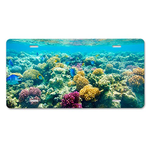 Plate Coral - 9